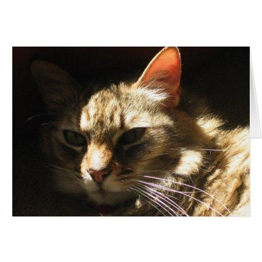 Chat tigré magnifique en soleil carte