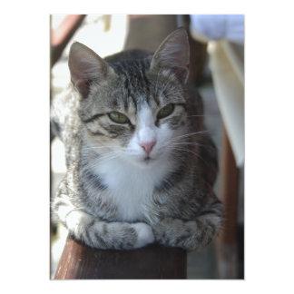 Chat tigré mignon - se reposant sur la barrière carton d'invitation  13,97 cm x 19,05 cm