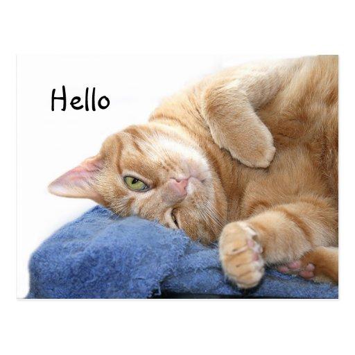 Chat tigré orange cartes postales