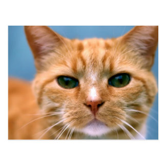 Chat tigré orange de chaton de Kitty Cartes Postales