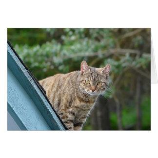 Chat tigré sur le toit carte