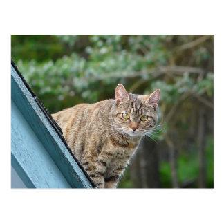 Chat tigré sur le toit carte postale
