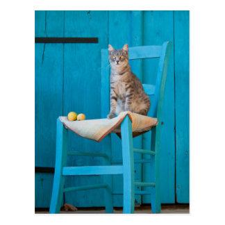 Chat tigré sur une chaise bleue carte postale