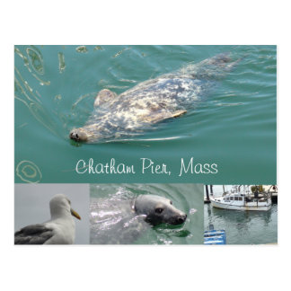 Chatham, Mass Postcard with Cute Seals