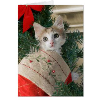 Chaton dans des cartes de Noël de bas