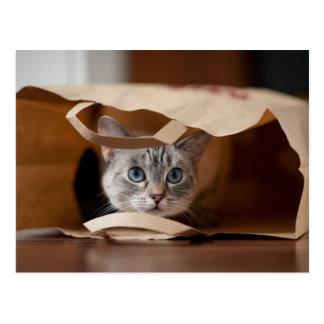 Chaton dans le sac d'épicerie carte postale