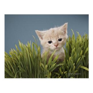 Chaton dans l'herbe carte postale