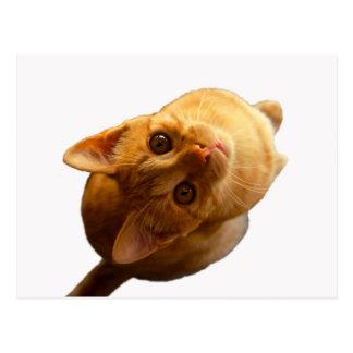 Chaton de chat tigré de gingembre cartes postales