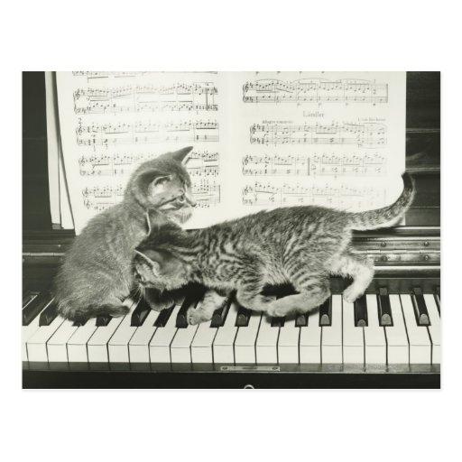 Chaton deux jouant sur le clavier de piano, (B&W) Cartes Postales