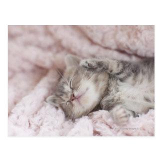 Chaton dormant sur la serviette carte postale