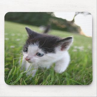 Chaton noir et blanc de bébé dans le mousepad d'he tapis de souris