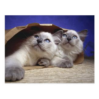 Chats dans le sac de papier carte postale