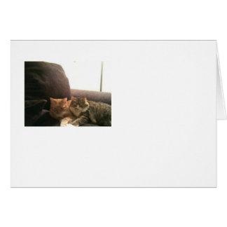 Chats tigrés carte de vœux