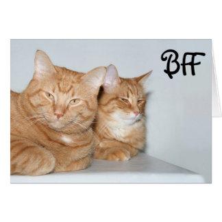 Chats tigrés oranges BFF Cartes De Vœux