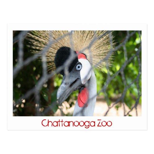 Chattanooga Zoo Postcard