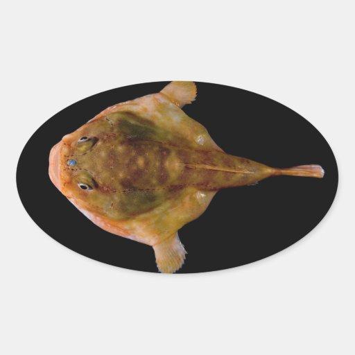 Chaunax Stigmaeus Fish Sticker