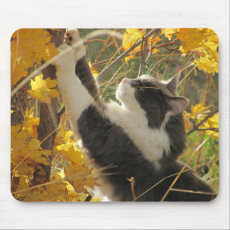 Checking out the fall colors mouse pad