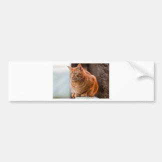 Chedder Bumper Sticker