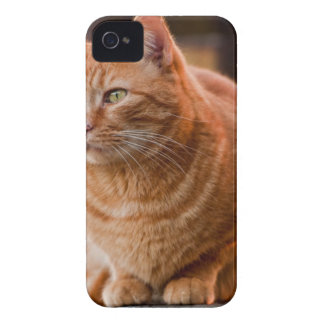 Chedder iPhone 4 Case-Mate Case