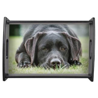 Cheeky Chocolate Labrador Serving Trays