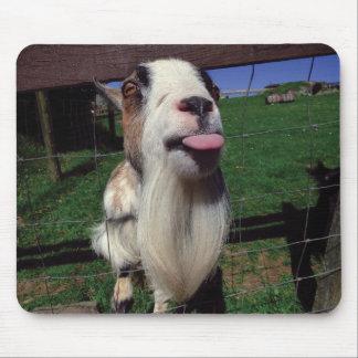 Cheeky Goat Mouse Mat