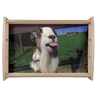 Cheeky Goat Tray Food Tray