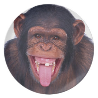 cheeky monkey chimp chimpanzee wild animal plate