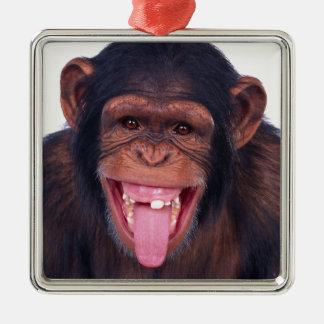 cheeky monkey chimp chimpanzee wild animal Silver-Colored square ornament
