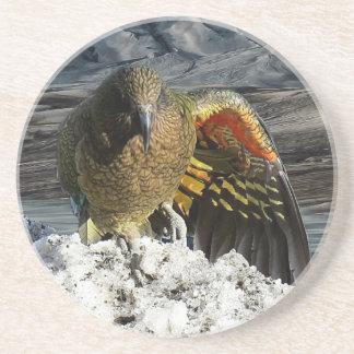 Cheeky new zealand kea mountain parrot coaster