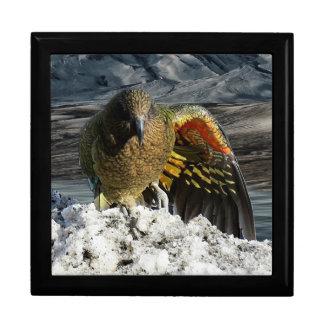 Cheeky new zealand kea mountain parrot gift box
