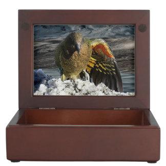 Cheeky new zealand kea mountain parrot keepsake box