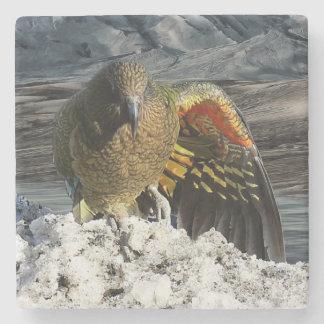 Cheeky new zealand kea mountain parrot stone coaster