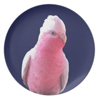 Cheeky pink and grey Australian parrot Party Plates