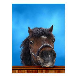 Cheeky pony, Customize me. Postcard