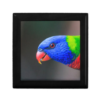 Cheeky-Rainbow-Lorikeet-silkenphotography Gift Box