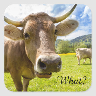 """Cheeky """"What?"""" Cow Square Sticker"""