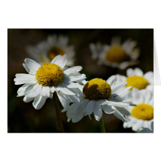 Cheerful daisies card