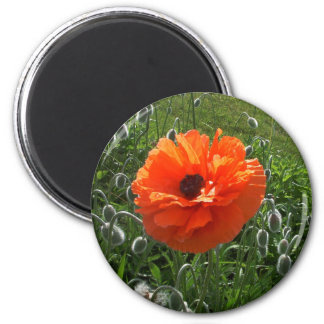 Cheerful Poppy Magnet
