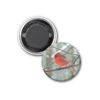 Cheery Red Cardinal Magnet