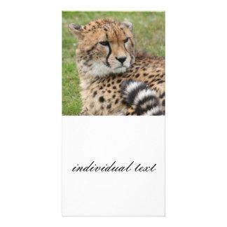 Cheetah 1115 photo greeting card