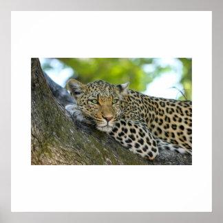 """Cheetah 24"""" x 24"""", Value Poster Paper (Matte)"""