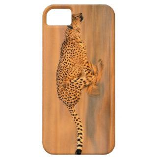 Cheetah 4 iPhone 5 case