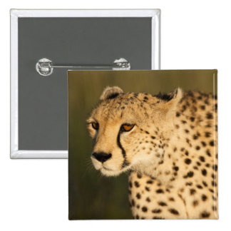 Cheetah, Acinonyx jubatus, in the Masai Mara 2 2 Inch Square Button