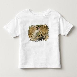 Cheetah, Acinonyx jubatus, mutual grooming in Shirts