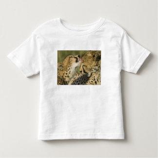 Cheetah, Acinonyx jubatus, mutual grooming in Tshirts