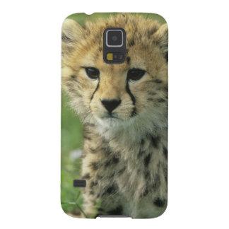 Cheetah, (Acinonyx jubatus), Tanzania, Serengeti Cases For Galaxy S5