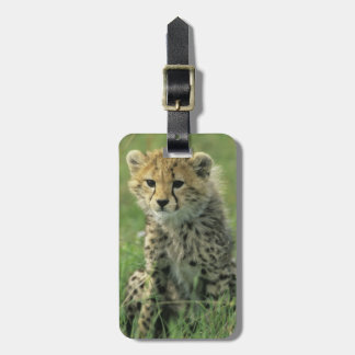 Cheetah, (Acinonyx jubatus), Tanzania, Serengeti Luggage Tag