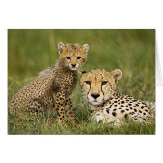 Cheetah, Acinonyx jubatus, with cub in the Greeting Card