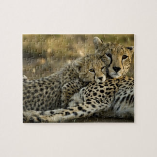 Cheetah, Acinonyx jubatus, with cub in the Masai 2 Puzzles