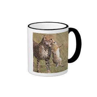 Cheetah (Acinonyx jubatus) with jackrabbit kill, Ringer Coffee Mug